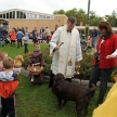 blessing-of-animals-2011-027